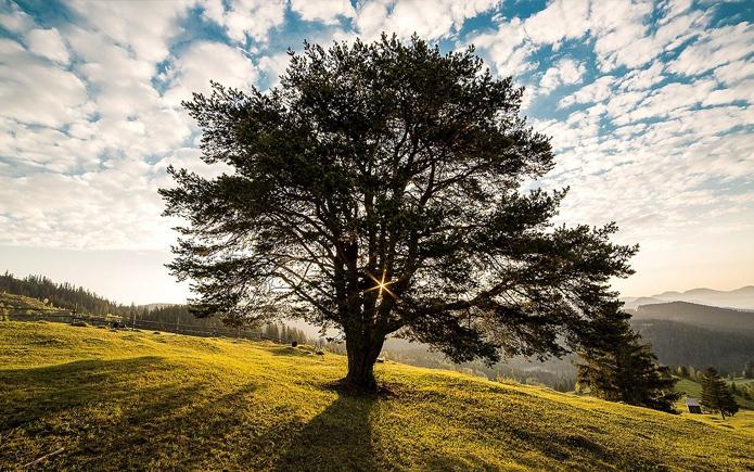 Mehr Schutz und Pflege für Bäume